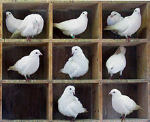 Coordinated care cannot have pigeon holes.